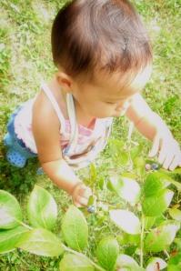 blueberrypickin09.10